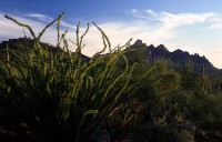 H Landscape 06