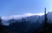 H Landscape 09