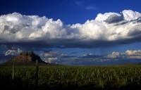 H Landscape 29