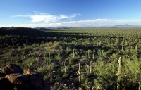 H Landscape 33